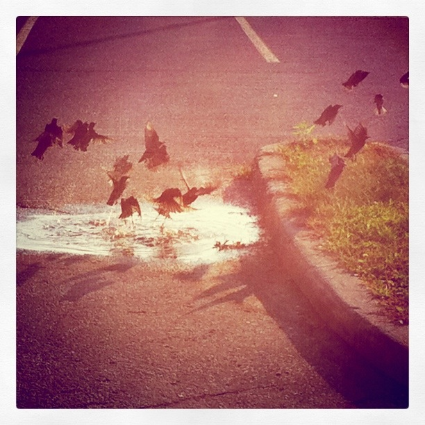 Bird Bath - Taken with Instagram and Camera+